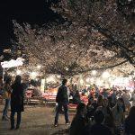 お花見in円山公園