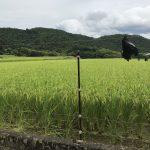 収穫の時期